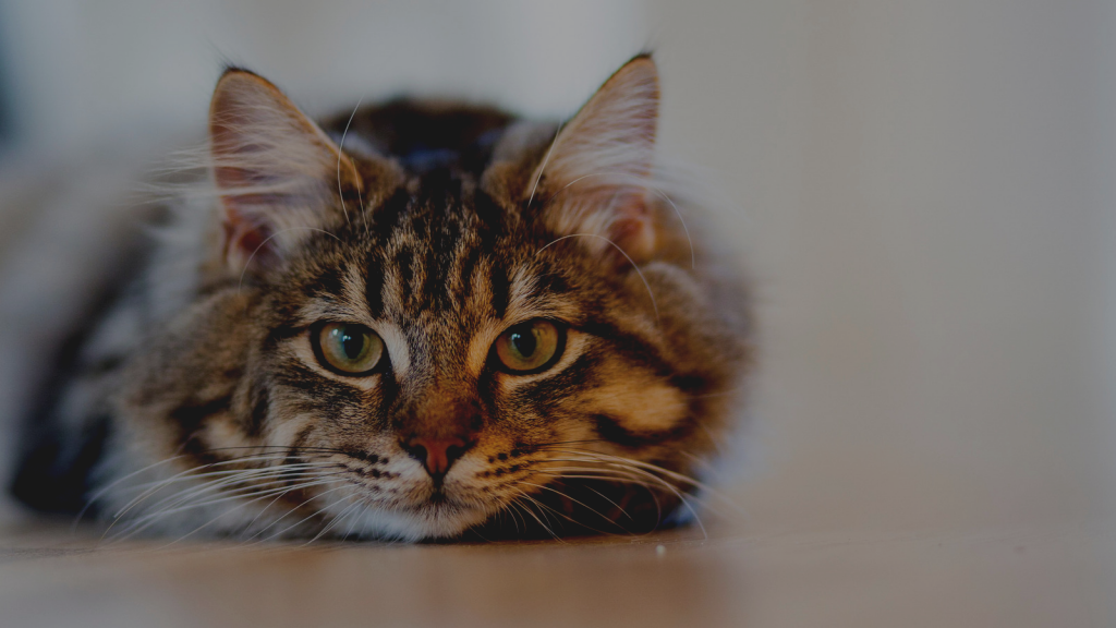 Common Cat Behavior and Solutions – West Valley Humane Society
